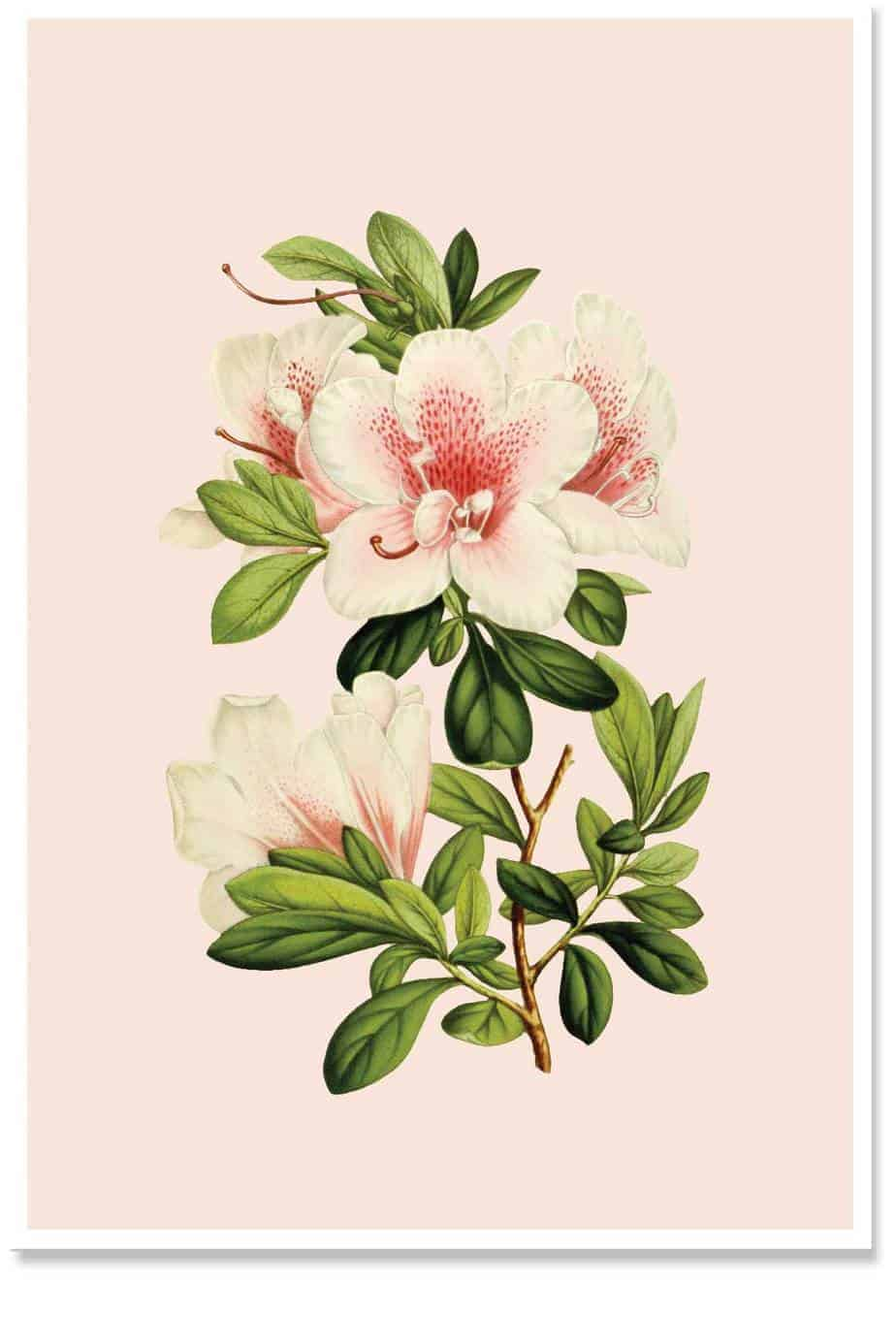 floral botanical home decor