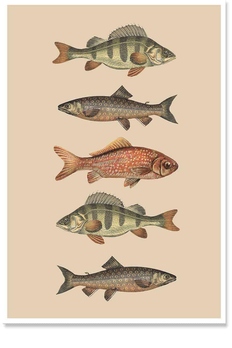 Fish Army Wall Art for interior Decor